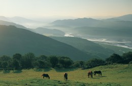 Horses graze the estuary slopes