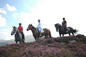 snowdonia-riding-stables