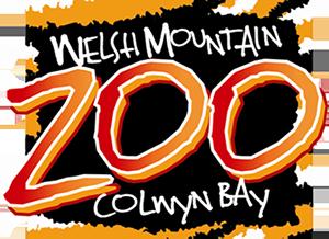 welsh-mountain-zoo